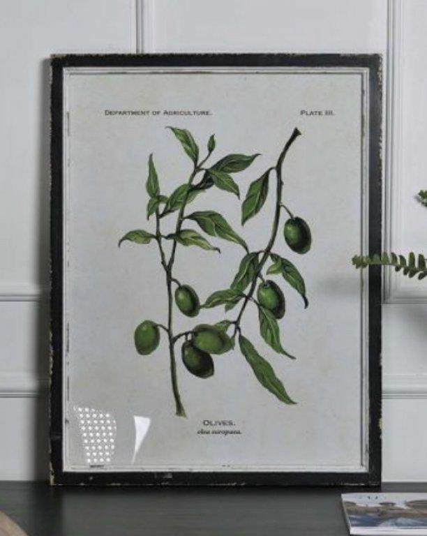 Olive Print I