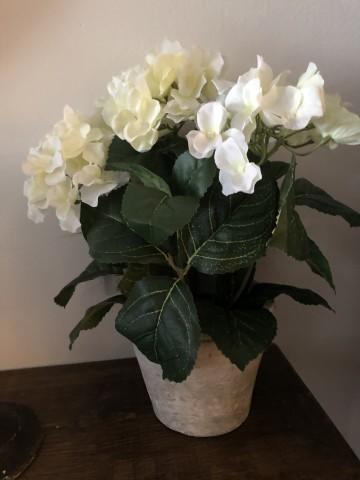 Faux White Geranium