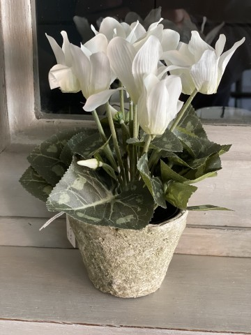 Faux White Cyclamen